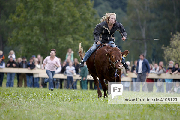 Traditionelles bayerisches Ochsenrennen im Wittelsbacher Land  Bayern  Deutschland