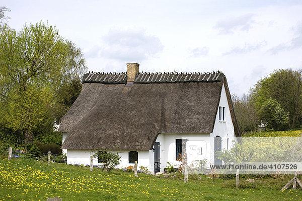 Vorbildlich restaurierte alte Reetdachkate auf dem Lande  Brodersby  Landschaft Angeln  Schleswig-Holstein  Deutschland  Europa