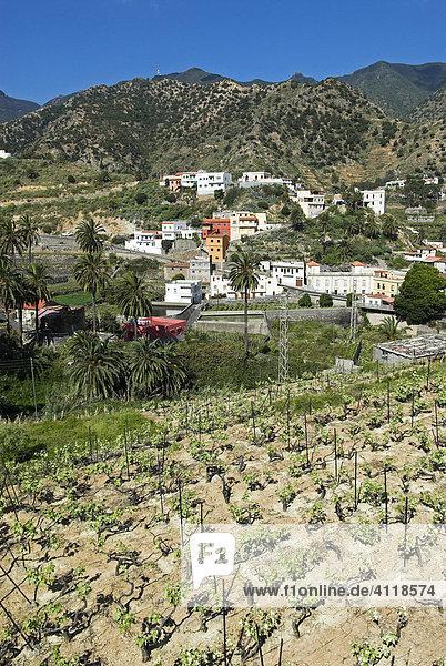 Weinbau bei Vallehermoso  Insel La Gomera  Kanarische Inseln  Spanien  Europa Insel La Gomera