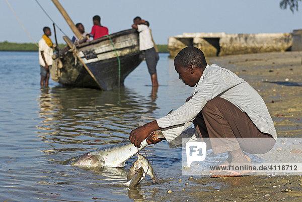 Fischer bei der Arbeit  Ibo Island  Quirimbas Archipel  Mosambik  Afrika