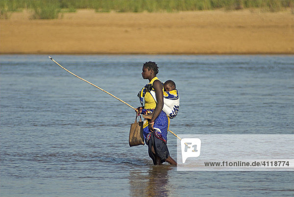 Überqueren des Rio Pungué im Gorongosa Nationalpark  Mosambik  Afrika