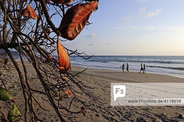 Beach of Santa Teresa  Mal Pais  Nicoya Peninsula  Costa Rica  Central America