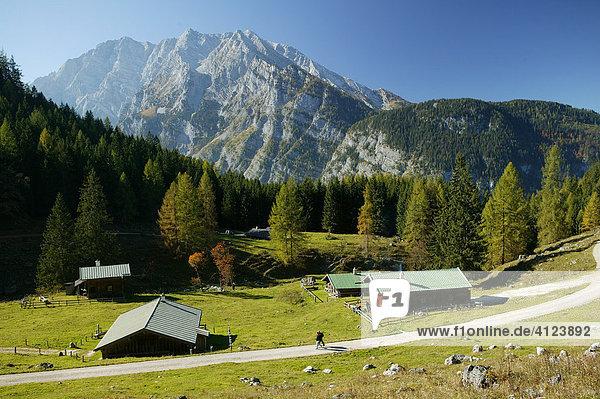 Gotzental-Alm  Watzmann  Berchtesgadener Land  Oberbayern  Deutschland