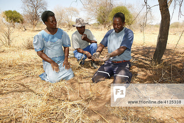 Traditioneller Heiler zeigt verschiedene Heilpflanzen  Sehitwa  Botswana  Afrika