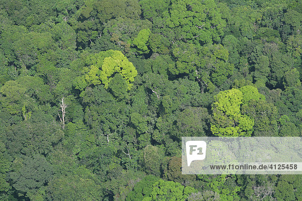 Regenwald  Luftaufnahme  Guyana  Südamerika