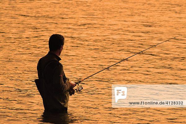 Spinnfischer mit Wathose fischt bei untergehender Sonne im Rhein  Deutschland