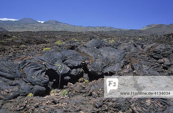 Typical volcanic landscape near La Restinga  El Hierro  Canary Islands  Spain