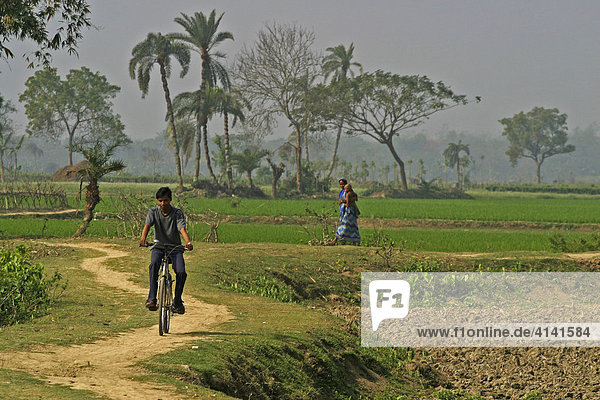 Junger Mann auf Fahrrad  junge Frau mit Kind zwischen Palmen und Reis-Feldern  Westbengalen  Indien
