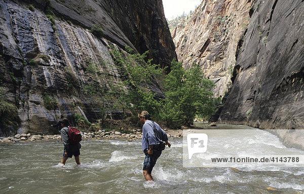 USA  Vereinigte Staaten von Amerika  Utah: Zoo National Park  The Narrows  Hiking im Fluss.