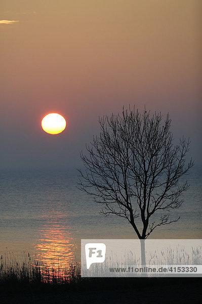 Sonnenaufgang am Augustenborg fjord  Dänemark