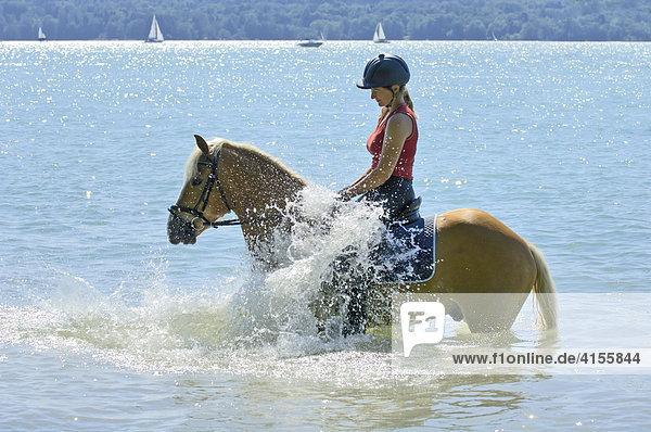 Junge Reiterin auf Haflinger im Starnberger See (Bayern  Deutschland)