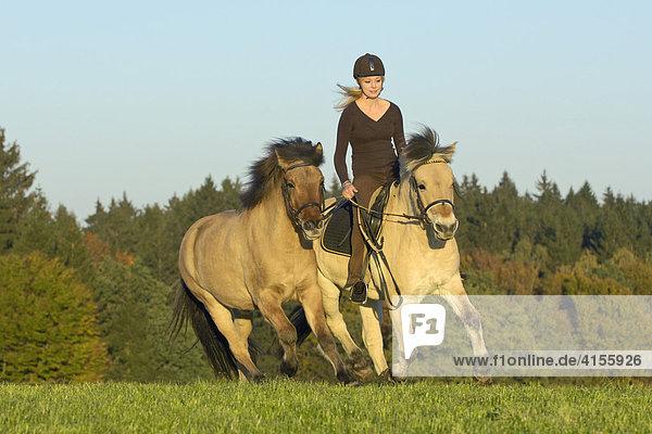 Jugendliche Reiterin auf Norweger (Fjordpferd) mit Isländer als Handpferd