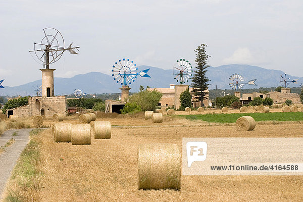 Windmühlen mit Strohballen im Vordergrund  Mallorca  Spanien
