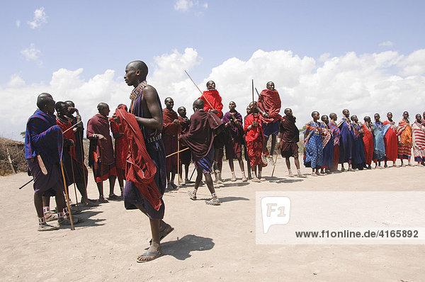 Massai  Massai warriors having a traditional dance  Amboseli national park  Kenya  Africa
