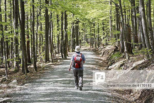 Lusen  Nationalpark Bayerischer Wald  Niederbayern