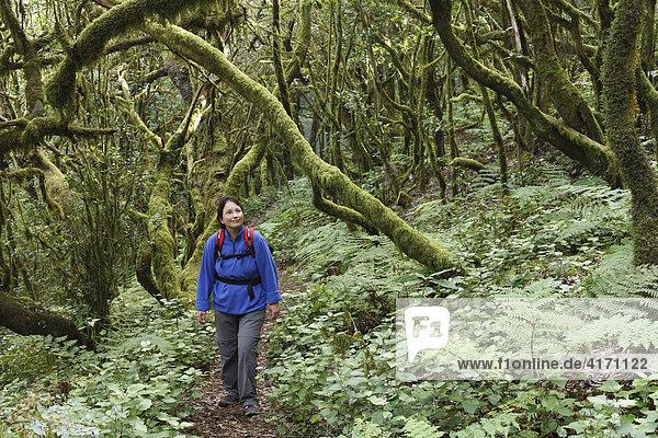 Frau wandert durch Lorbeerwald in Nationalpark Garajonay  La Gomera  Kanaren  Spanien