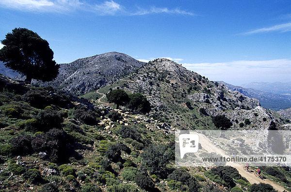 Mountainbiker  Ida-Gebirge  Kreta  Griechenland