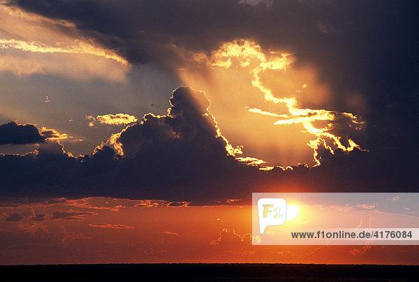 Sonnenuntergang  Etosha National Park  Namibia  Afrika