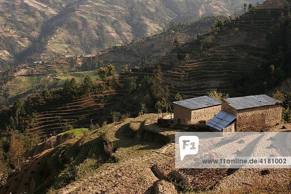 Terrassenanbau in Handarbeit in den Bergen rund um Nagarkot  Nepal  Asien