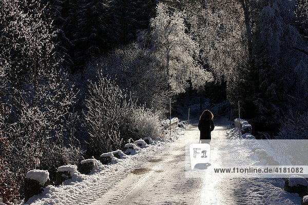 Spaziergang im Winter am Schluchsee im Schwarzwald  Baden-Württemberg  Deutschland  Europa
