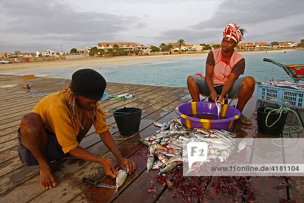 Fishermen cleaning their catch on a dock  Santa Maria  Sal Island  Cape Verde  Africa