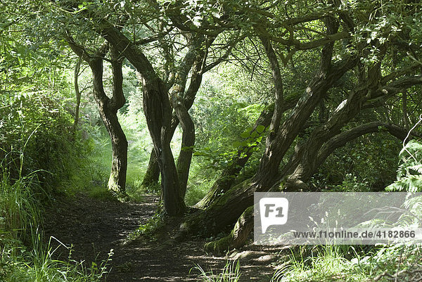Romantische Weg in der Bretagne bei Morlaix. Morlaix  Bretagne  Frankreich
