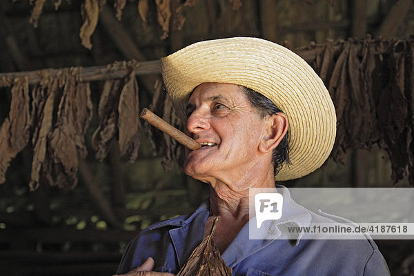 Tabakbauer im Valle de Vinales in der Sierra de los Organos  Kuba  Karibik