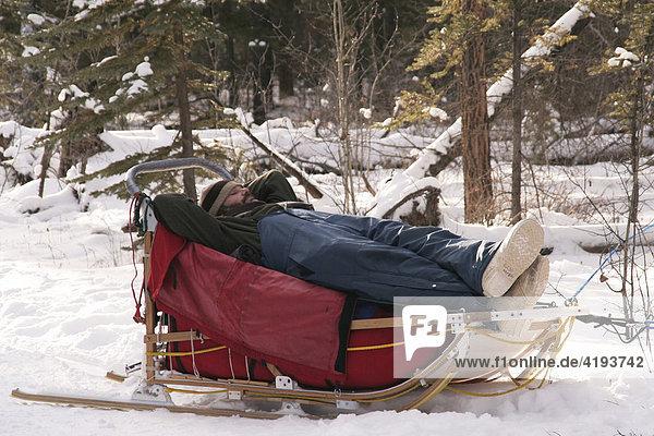 Mann schläft im Hundeschlitten  Yukon Territorium  Kanada