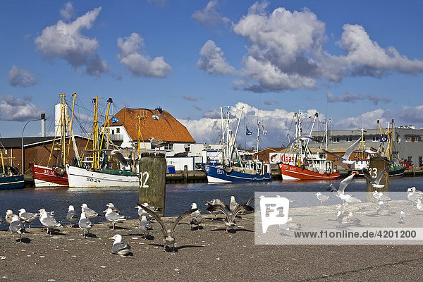 Seagulls on a wharf in front of fishing cutters in the harbour of the North Sea resort town of Buesum  Dithmarschen  Schleswig-Holstein  Wattenmeer  Germany