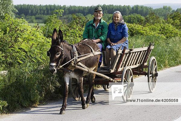Bauern mit Eselsfuhrwerk  Bulgarien  Europa
