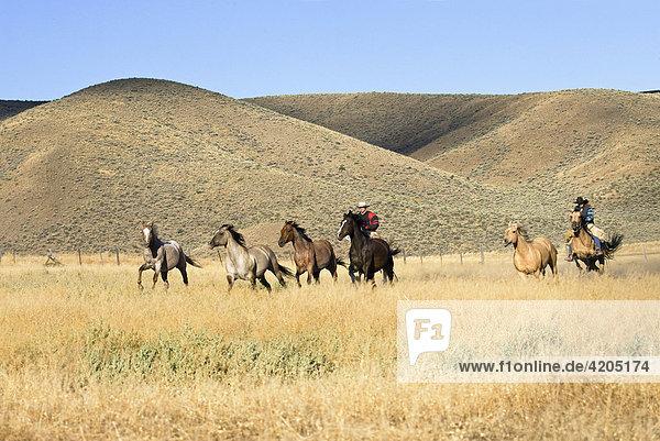 Cowgirl und Cowboy mit Pferden  Wilder Westen  Oregon  USA