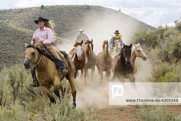 Cowgirl und Cowboy mit Pferden  Oregon  USA