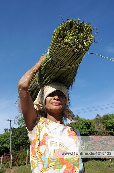 Burmese Woman Transport Reed on the Head