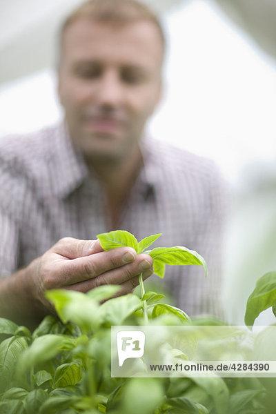 Gemüse- und Obstanbau