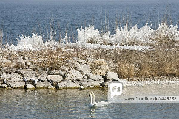 Winterliche Wasserlandschaft