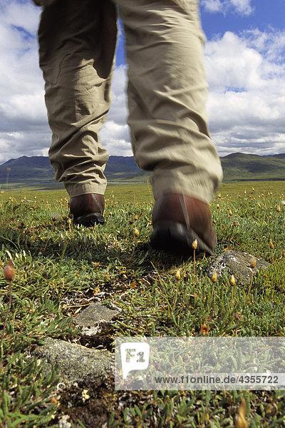 Wanderer 's Füße gehen auf Tundra ANWR AR AK Sommer