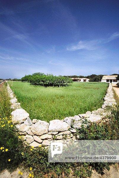 Typical stone wall. Sant Francesc Xavier. Formentera. Balearic Islands. Spain