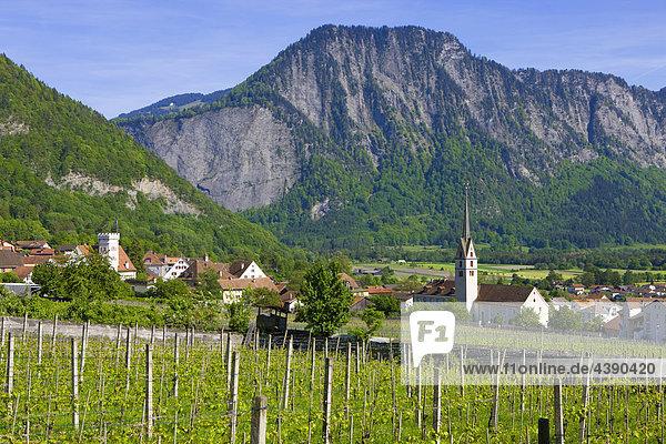 Malans  Schweiz  Europa  Kanton Graubünden  Bündner Herrschaft  Dorf  Häuser  Kirche  Rebberg  Reben  Wald  Berge Kanton Graubünden