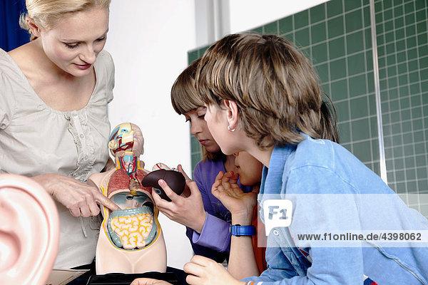 Lehrer demonstrieren Modell des menschlichen Körpers an drei Schüler