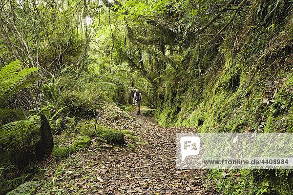 Neuseeland  Südinsel  Frauen wandern auf dem Rainforest Trail
