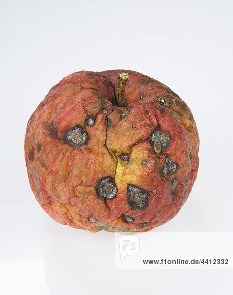 Verrotteter Apfel auf weißem Grund