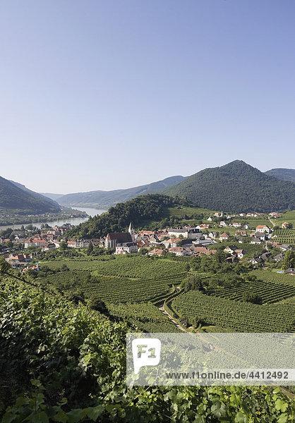 Österreich  Wachau  Spitz  Donau  Weinberge