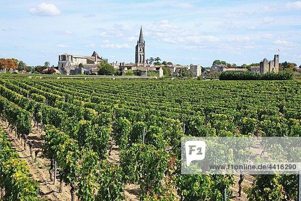 France  Gironde  Saint-Emilion  Bordeaux vineyards