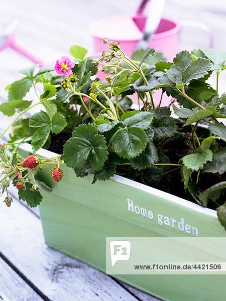 Pflanze Garten Blumentopf