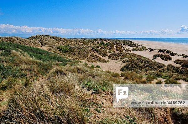 Braunton Burrows sand dunes at Saunton near Braunton on the North Devon coast  England  United Kingdom