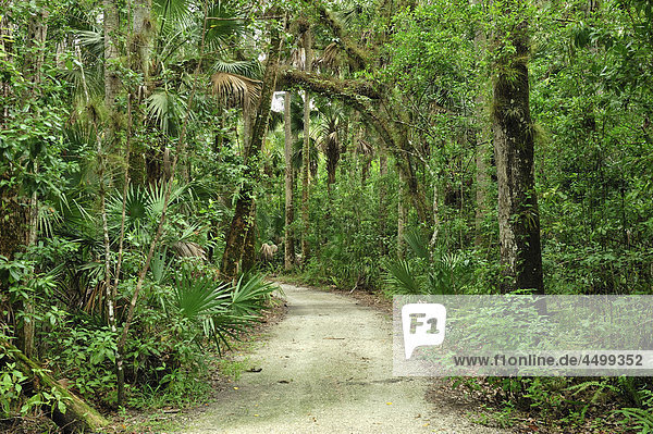 trail  forest  Caloosahatchee  Regional Park  near Fort Myers  Florida  USA  United States  America