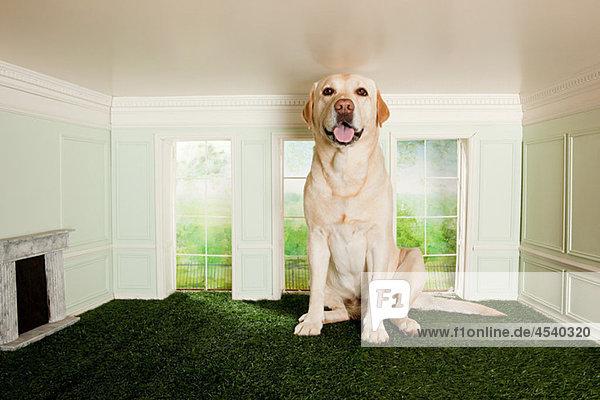 Großer Hund im kleinen Zimmer