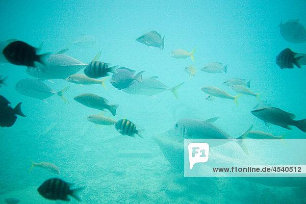 Fisch im Meer  Curacao  Antillen