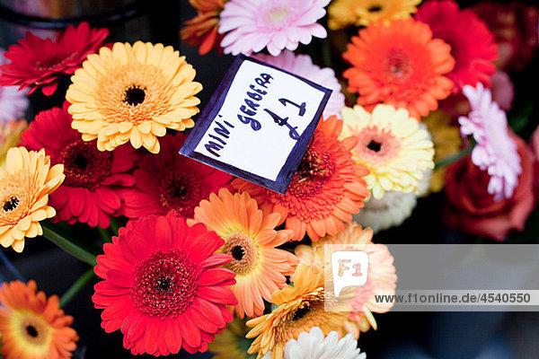 Bunte Gerbera-Blumen