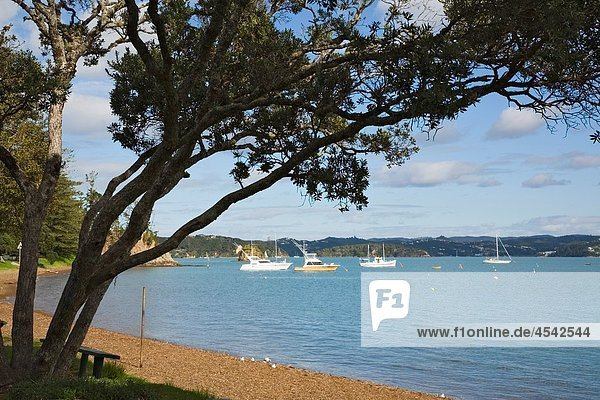Russell Bay of Islands Northland North Island New Zealand Beach foreshore and view out to sea to moored boats in bay framed by Pohutukawa tree branch